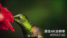 索尼推出K家用投影机VPL-VW798 4